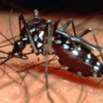 US researchers hopeful for dengue vaccine