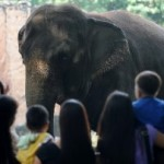 Internet outrage at Manila Zoo