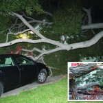 Tree splits, falls and crushes my wife's car